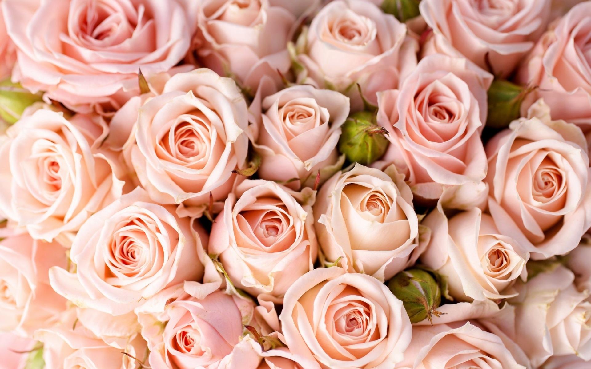 розовые розы картинки красивые горизонтальные желании