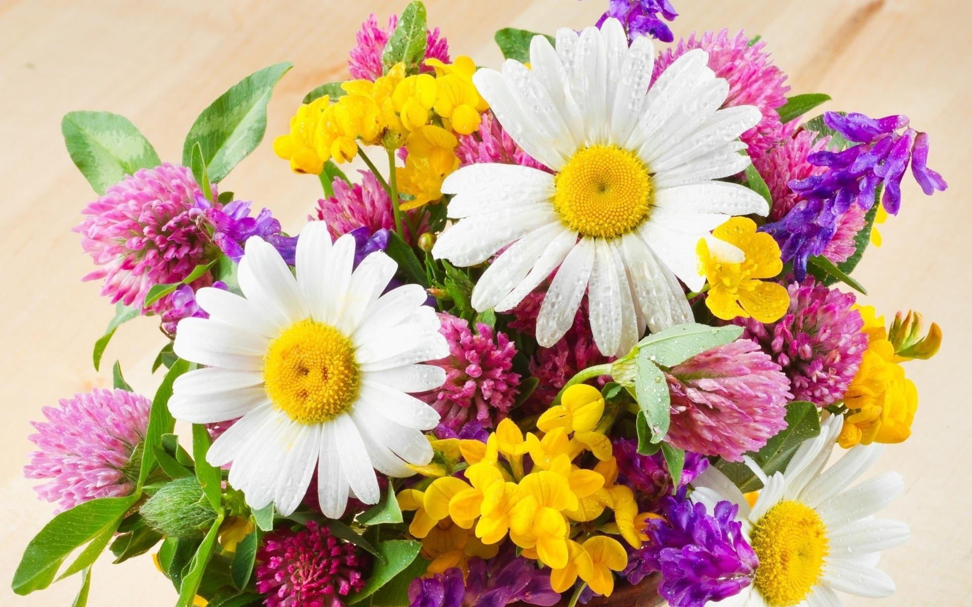 577cacc0784 Букет полевых цветов скачать фото обои для рабочего стола