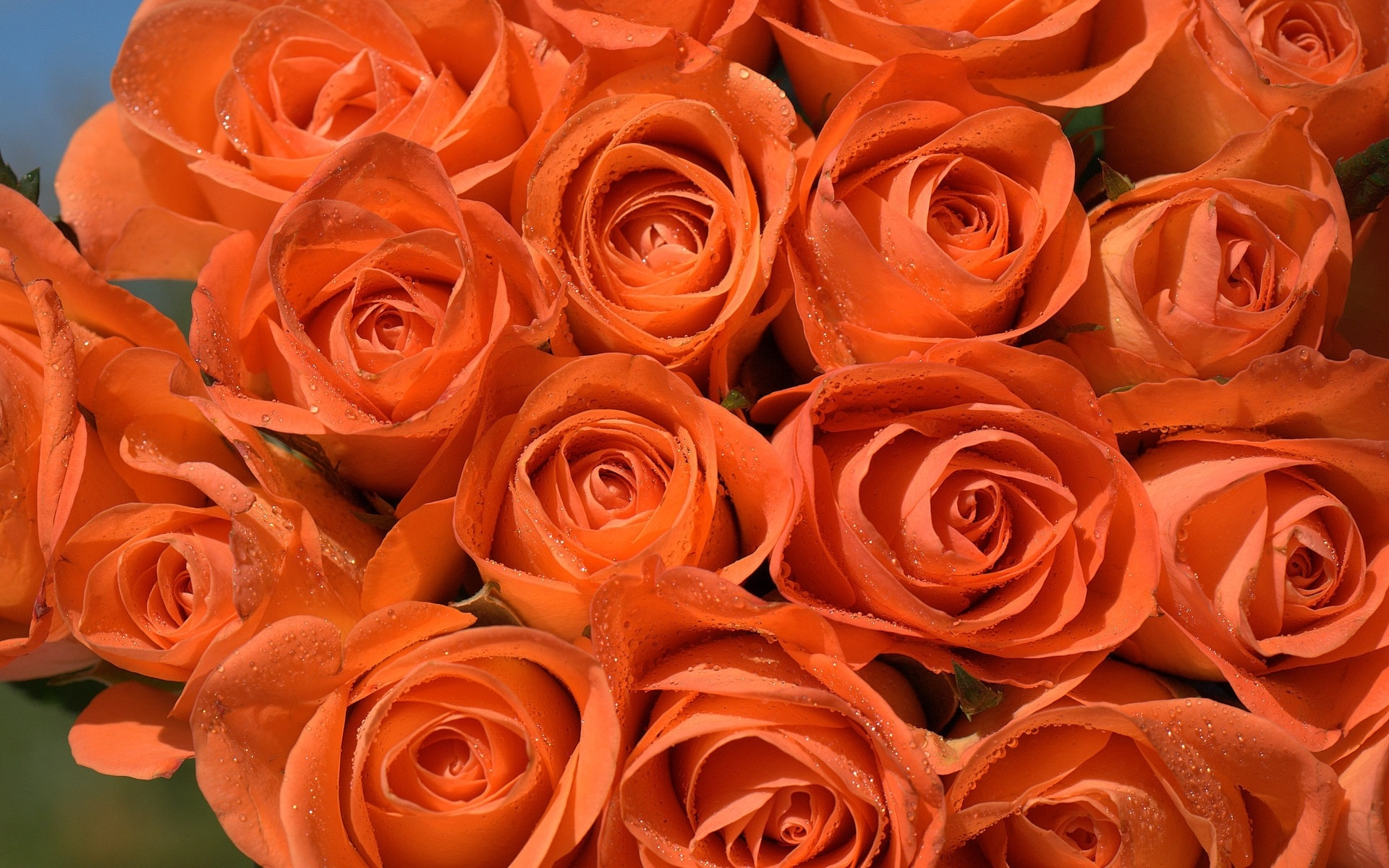 есть время розово оранжевые розы картинка мастики