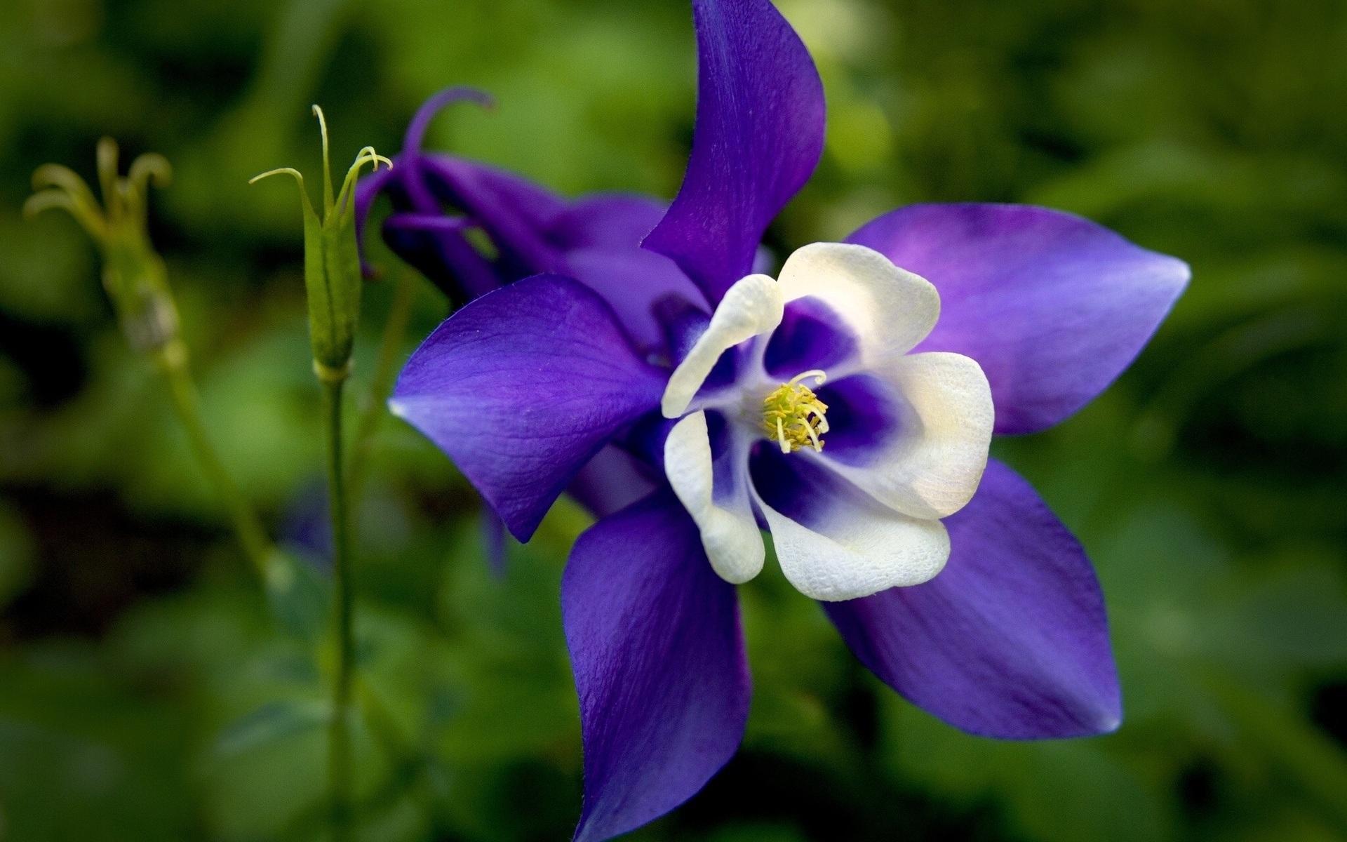 Fotos de flores de floriculturas 65
