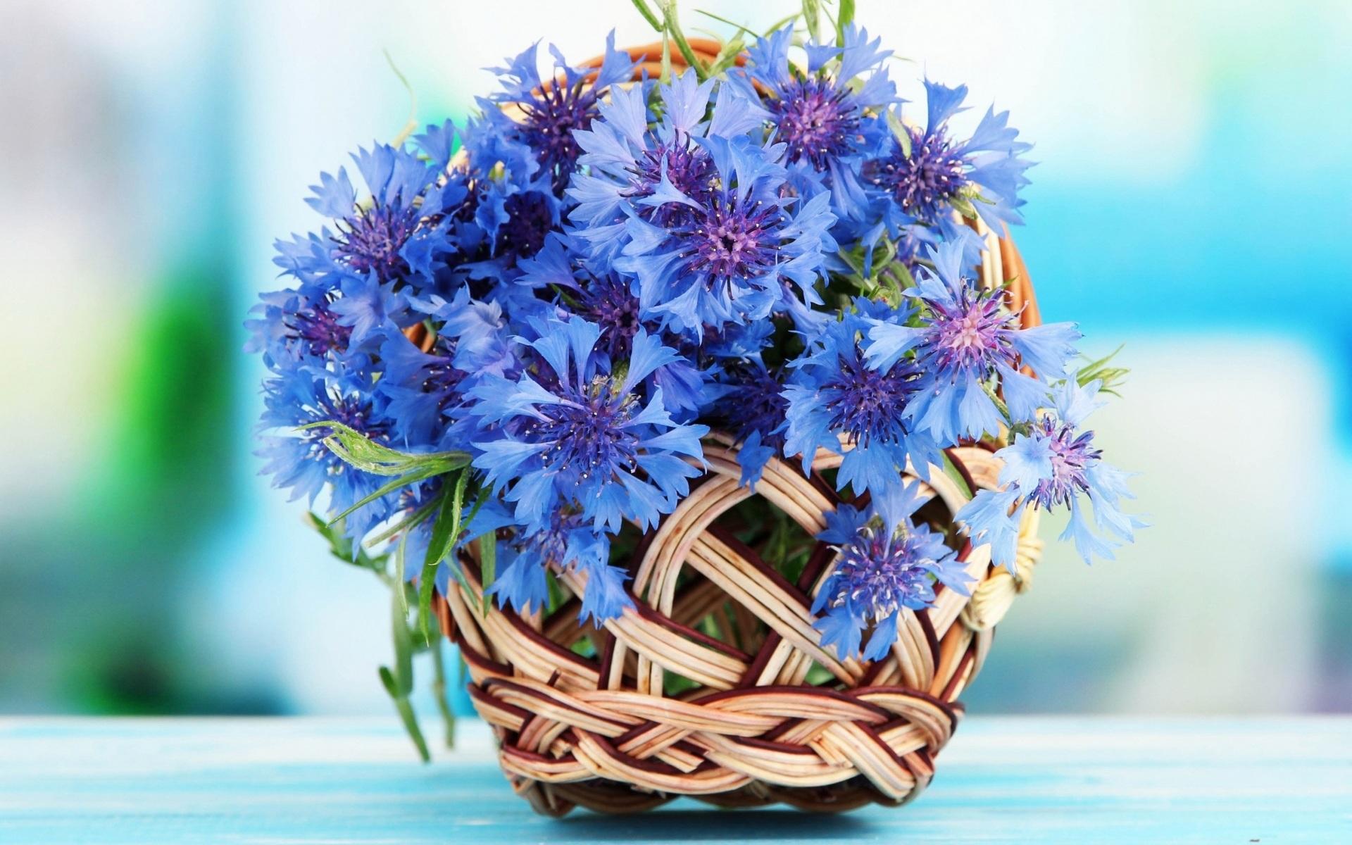 http://img.desktopwallpapers.ru/flowers/pics/wide/1920x1200/64277776c246c7e5f85596aa1ca9b940.jpg