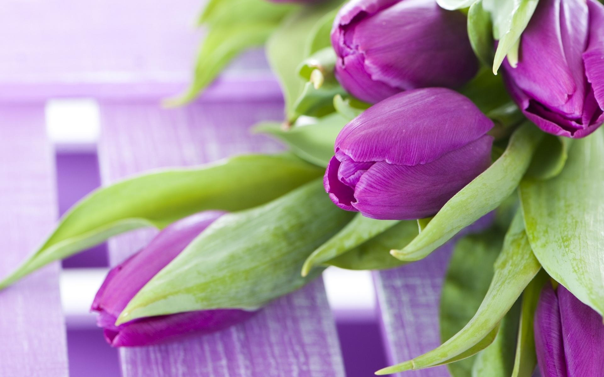 Обои для рабочего стола широкоформатные цветы