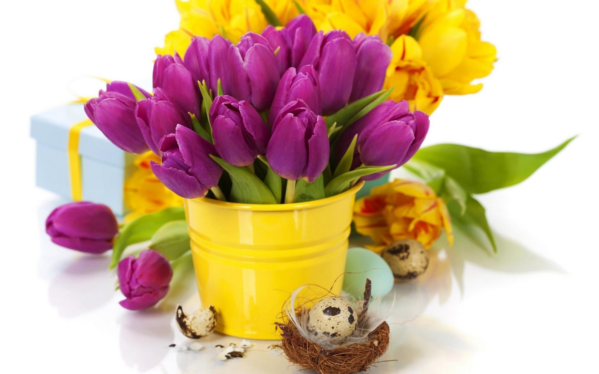 Фото тюльпанов на рабочий стол