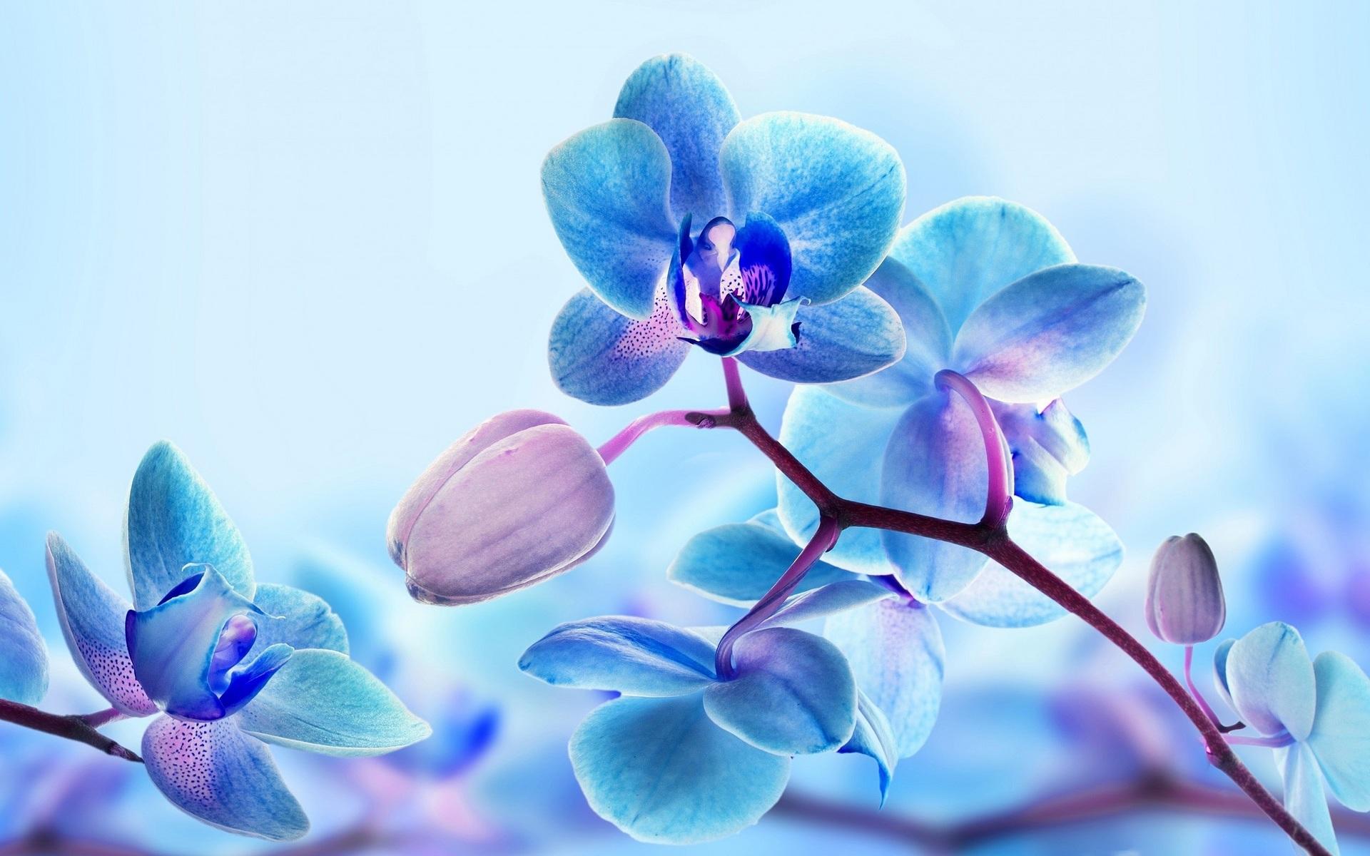 Орхидея  экзотические цветы