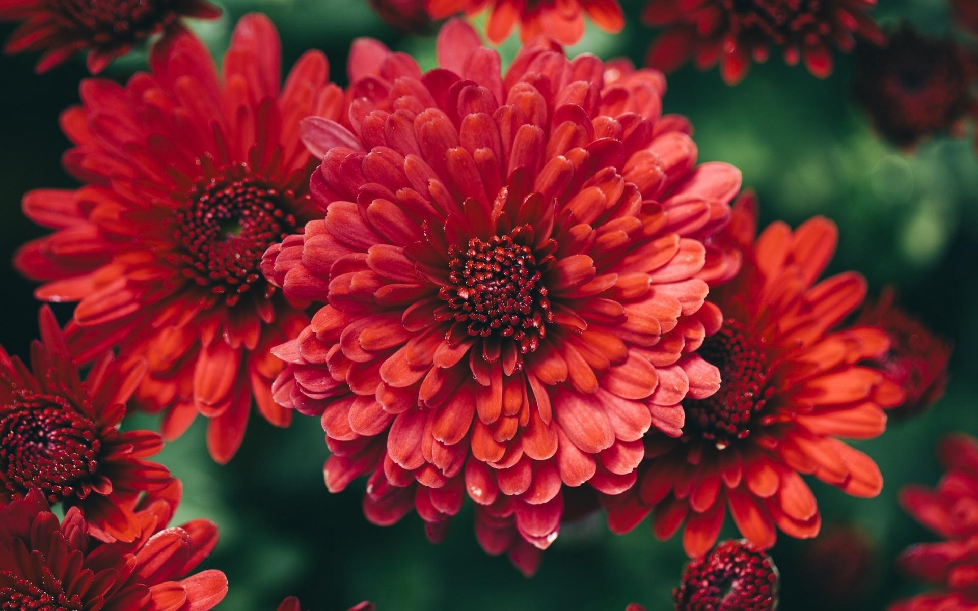 картинки на телефон красивые осенние цветы играть ними было