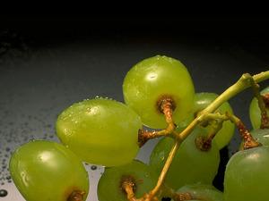 Обои Виноград