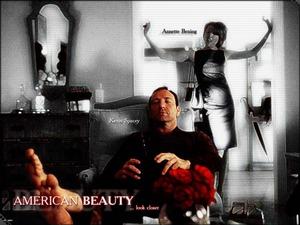Обои Красота по-американски (American beauty)