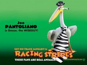 Обои Бешеные скачки (Racing Stripes)