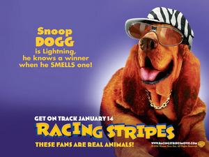 ���� ������� ������ (Racing Stripes)