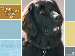 Обои Любовь к собакам обязательна (Must Love Dogs)