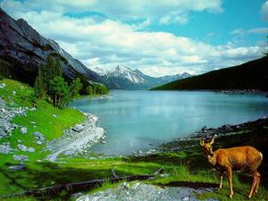 Обои Оленёнок у горного озера