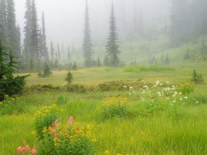 Обои Туманная долина