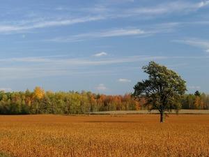 Обои Осенняя