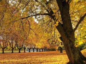 Обои Осень