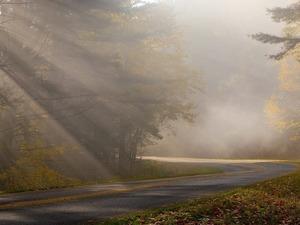 Обои Осенний туман
