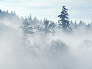Обои Зимний туман