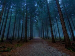 Обои Сумеречный лес