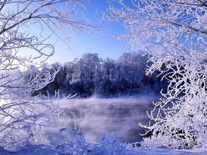 Обои Зимний сон