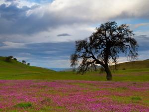 Обои Цветочная поляна