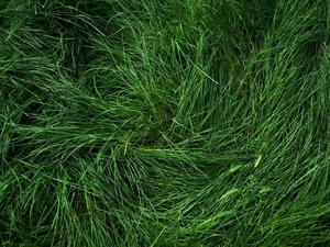 Обои Свежая трава