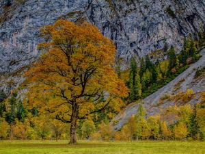 Обои Осенняя долина