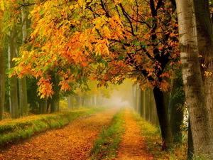 Обои Задумчивая осень