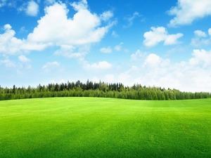 Обои Зелёное поле