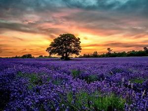 Обои Фиолетовый луг на закате