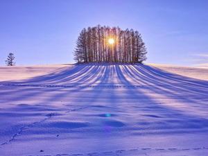 Обои Длинные тени от закатного солнца