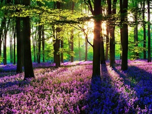 Обои Цветущий лес