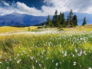 Обои Альпийские луга