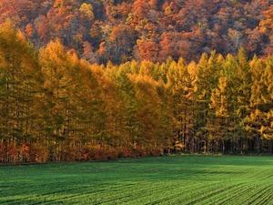 Обои Краски ранней осени