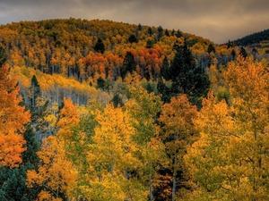 Обои Краски осеннего леса