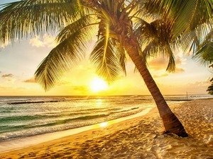 Обои Пальмовый закат