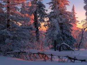 Обои Зимний лес