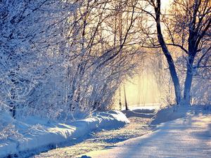 Обои Зимнее утро