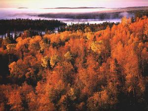 Обои Рыжая осень