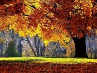 Обои для рабочего стола: Осень