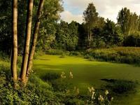 Обои для рабочего стола: Заросшее болото в лесу