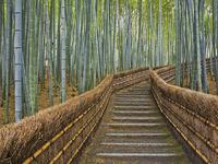 Обои для рабочего стола: Бамбуковый парк