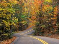Обои для рабочего стола: Дорога в осеннем лесу