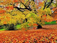 Обои для рабочего стола: Яркие краски осени