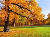 Обои для рабочего стола: Ранняя осень