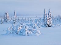 Обои для рабочего стола: Снежное царство