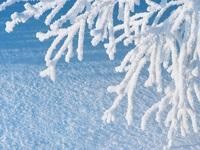 Обои для рабочего стола: Снежные ветви