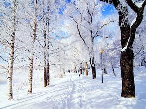 Обои Зимний день