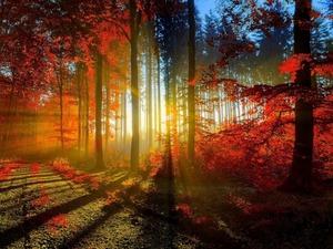 Обои Солнечные лучи в осеннем лесу