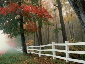 Обои Белая изгородь, ранняя осень