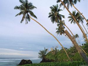 Обои Пальмы на берегу