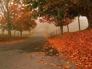 Обои Дорога в осень